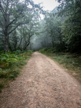 Misty forest walking the Camino de Santiago Villafranca Montes de Oca to Atapuerca on eatlivetravelwrite.com